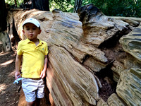 Avery at Big Basin Redwoods State Park