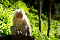 Jigokudani snow monkey