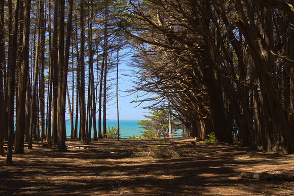 Trees at the Fitzgerald Marine Reserve
