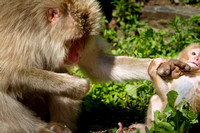 Snow monkey parenting tips (4 of 4)