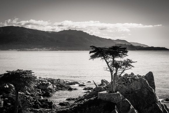 Lone Cypress, 17-Mile Drive
